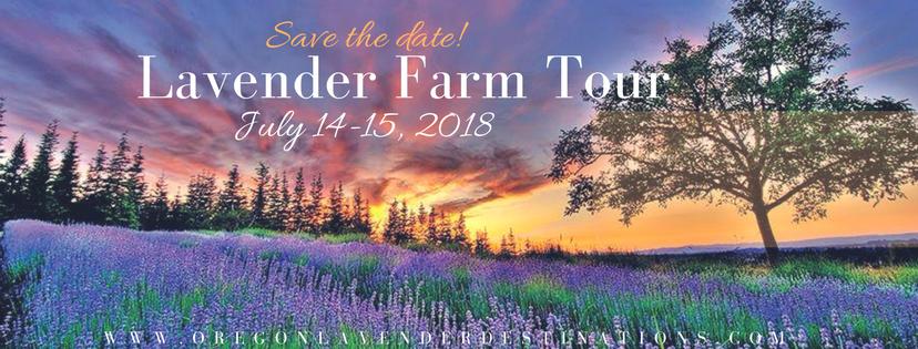 lavender farm.png