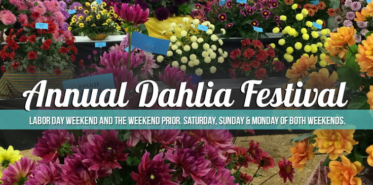 annual-festival-large.jpg