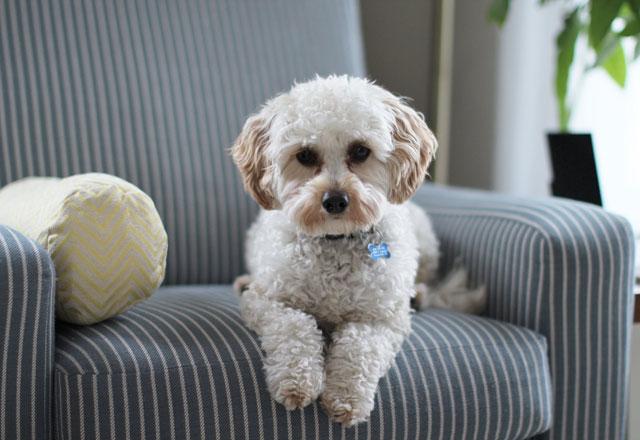 pet-proof-your-home.jpg