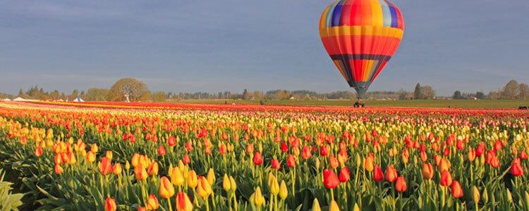 tulip-fest-gallery1-750x300.jpg
