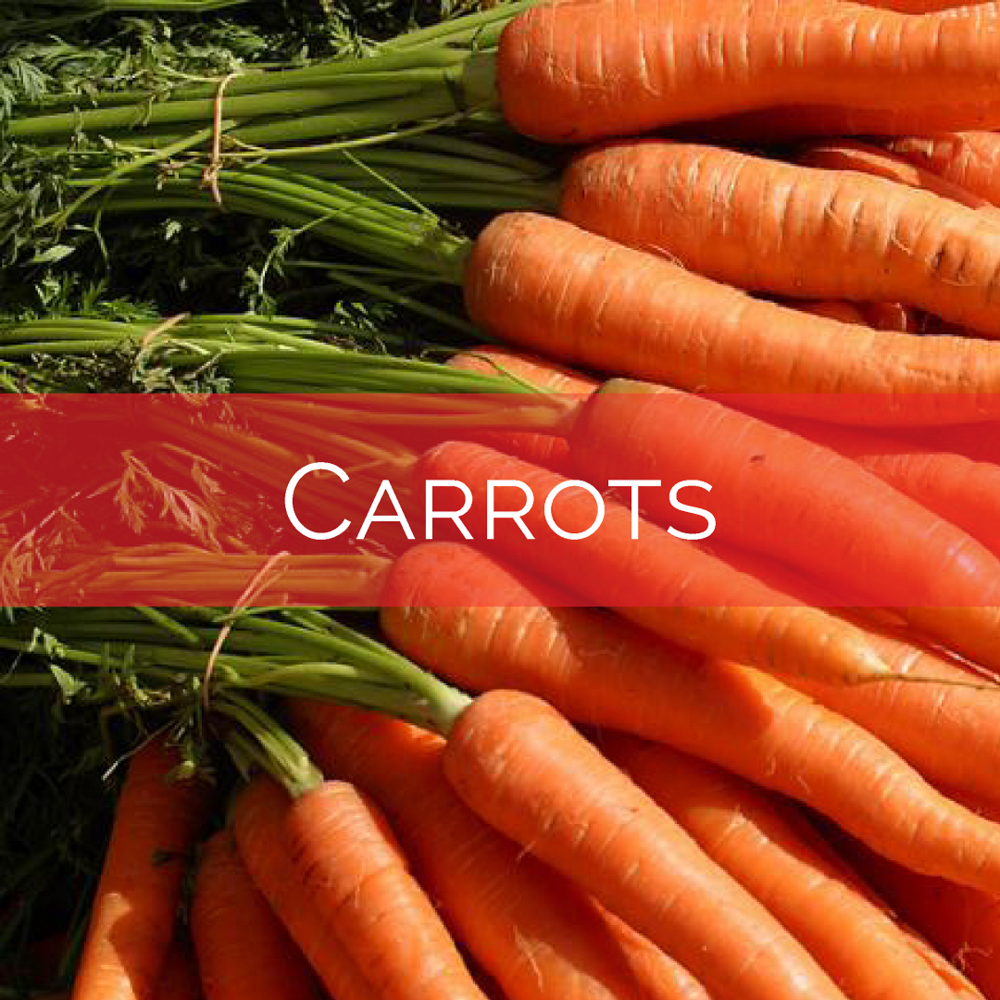Carrots w. banner.png
