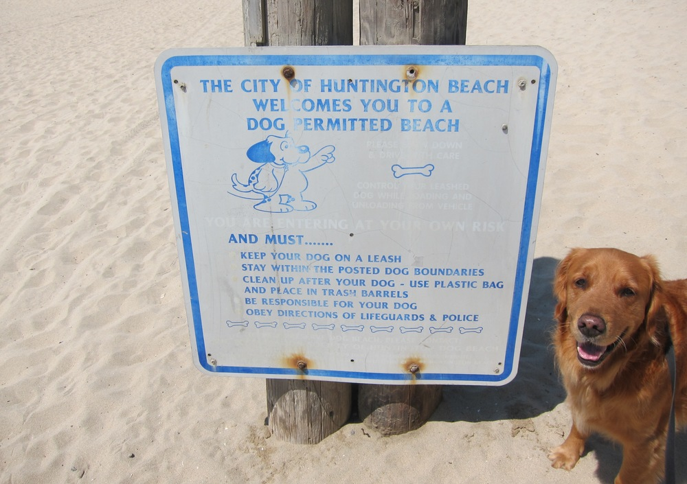 The only dog beach in Orange County, Huntington Dog Beach serves as a seaside playground for unleashed canines (although technically dogs should be leashed). Stretching along more than a mile of Huntington City Beach shoreline, Dog Beach touches Seapoint Street at its northern tip and 21st Street to the south. The  Preservation Society of Huntington Dog Beach  maintains the beloved natural space, and they've done a fine job of displaying the rules on their  website  and on fliers and various signs at the locale.  (Photo by Lauren Lloyd)