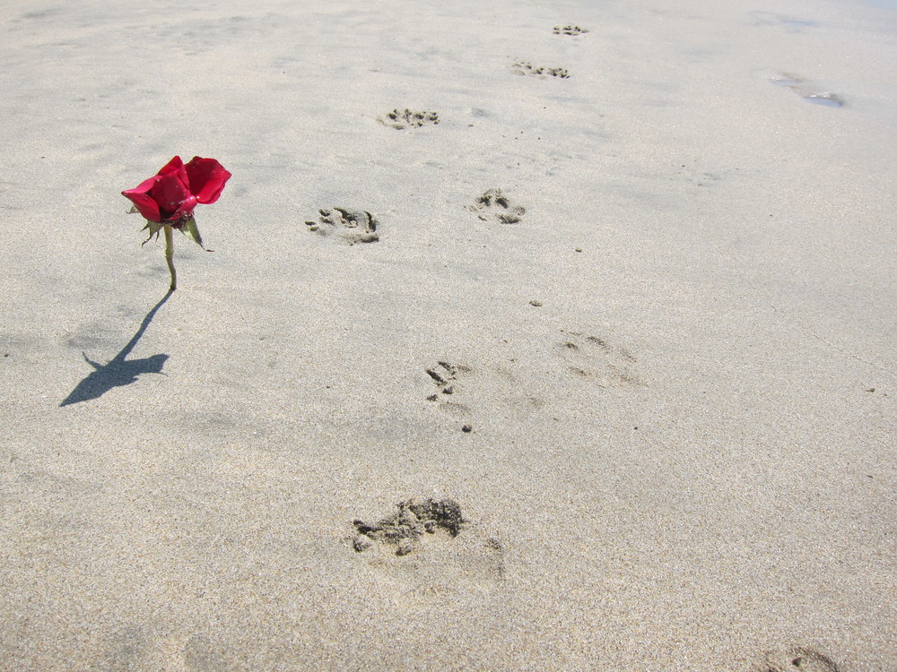 Do: Stick flowers in the sand like this beach romantic.
