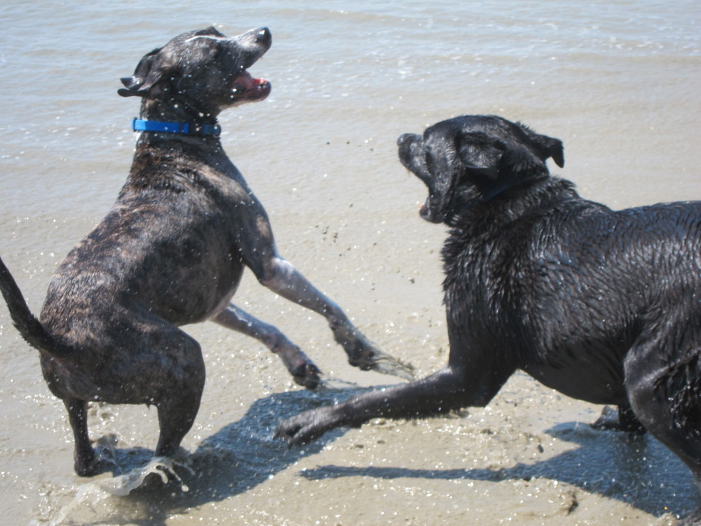 Don't: Unleash your aggressive dog on the rest of the beach.