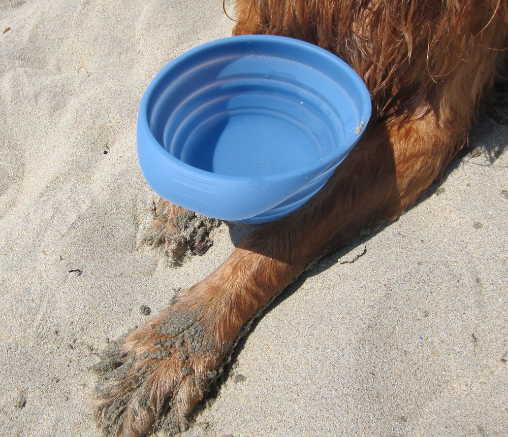Do: Hydrate your dog during his or her Dog Beach adventure.