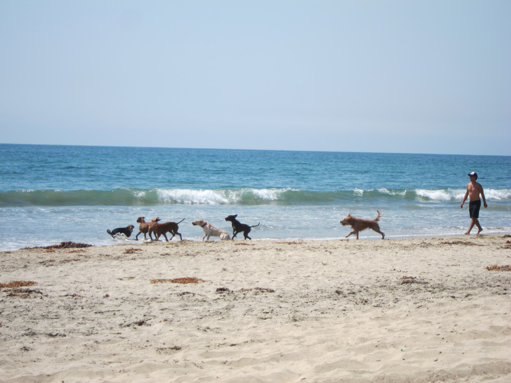 Do: Visit Dog Beach with your parading pack of pooches.