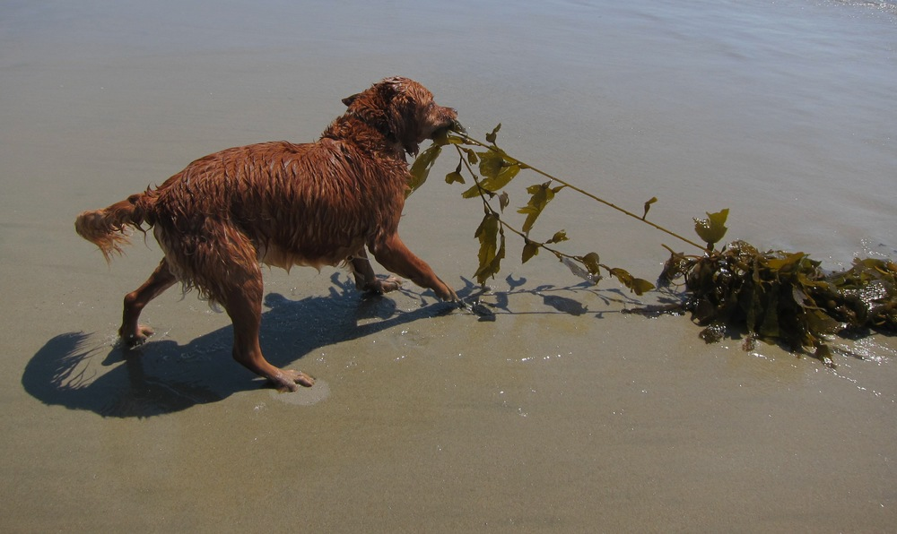 Do: Let your dog play with seaweed.