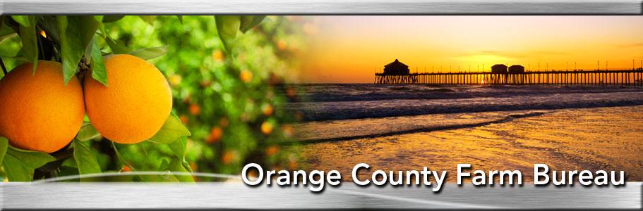 orangeheader.jpg