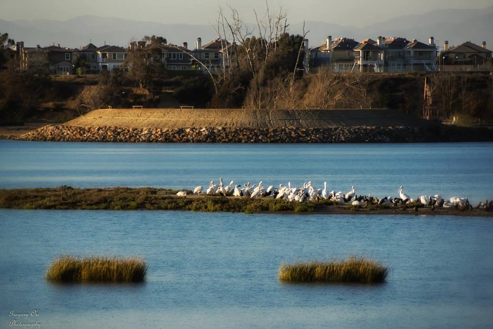 Bolsa Chica Wetlands (Photo by Gregory Ori)