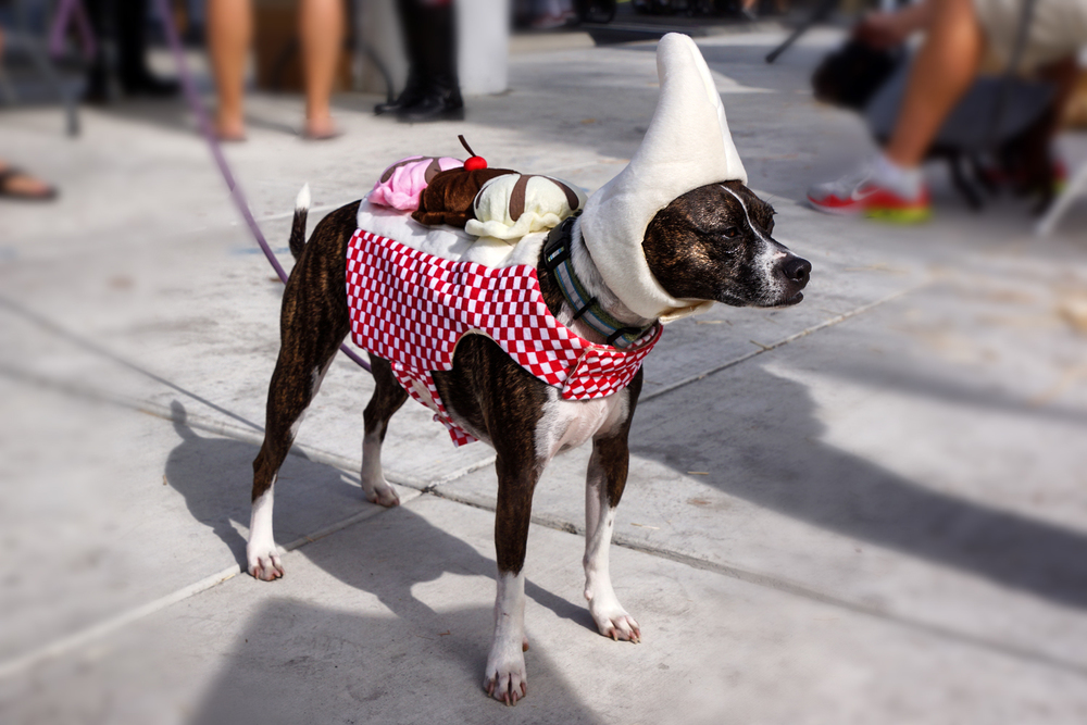 "Chuck the ""Banana Split,"" winner of Cutest Costume  (Photo by  Gregory Ori )"