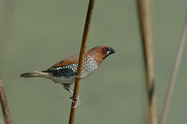 Shipley-Bird.jpg