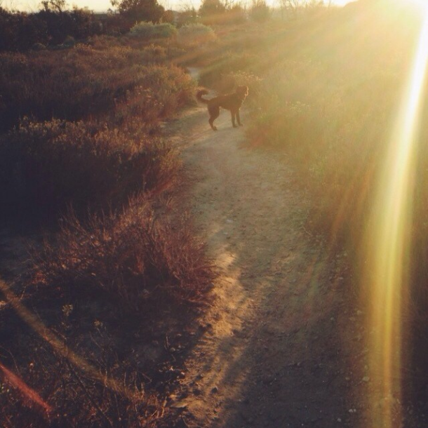 Finley at the Bolsa Chica Wetlands  (Photo by Mackenzie Matthews)