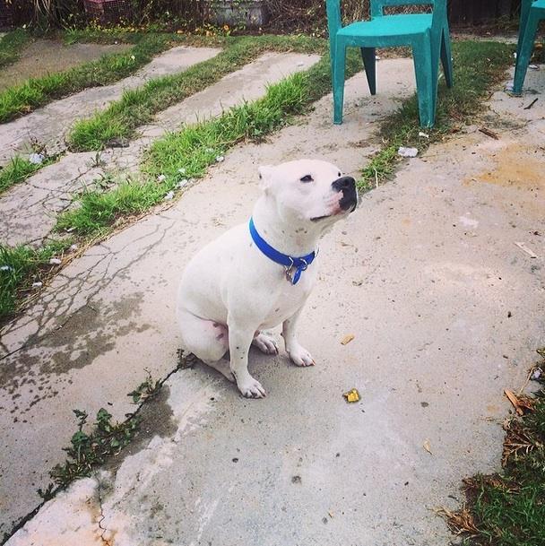 """#raindog"" AKA Otis (Photo by  Beach City Brewery  Head Brewer  Derek Testerman )"