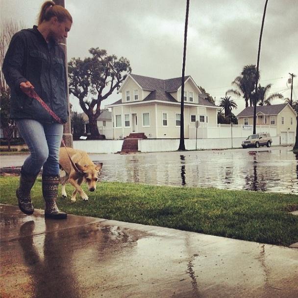 """""""Rain or shine :)""""  (Photo by  HB Dog Walk )"""