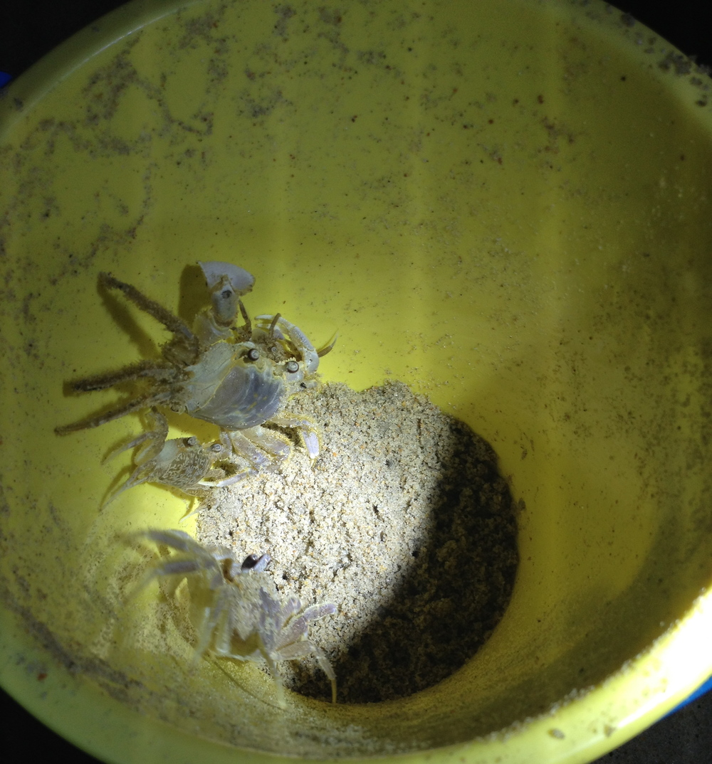 No ghost crabs were harmed during the taking of this photograph. (Photo by Lauren Lloyd)