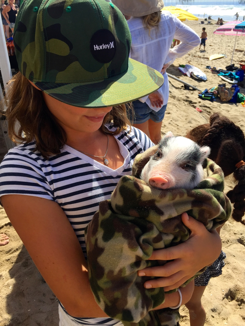 """Pig in a blanket"" at the  Reduce, Reuse, Recycle Surf Off.  Meet Ella and Gus.  (Photo by Lauren Lloyd)"