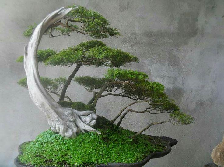 7b1e5beec0ad4e9c3ffcc67bf19e1033--bonsai-forest-bonsai-garden.jpg