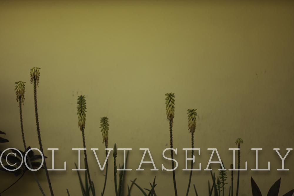 OLIVIASEALLY_018.jpg