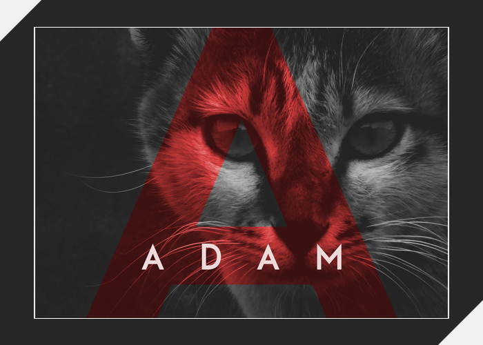 Adam1.jpg