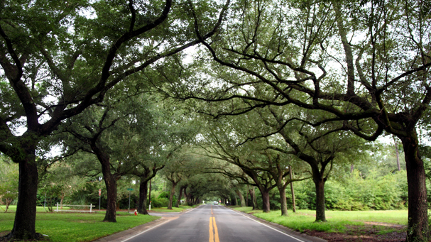 12th Ave Tree tunnel- beautiful oaks line the 12th Ave entrance to East Hill