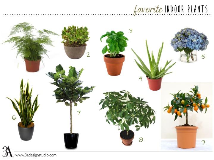 Favorite Indoor Plants 3A DESIGN STUDIO