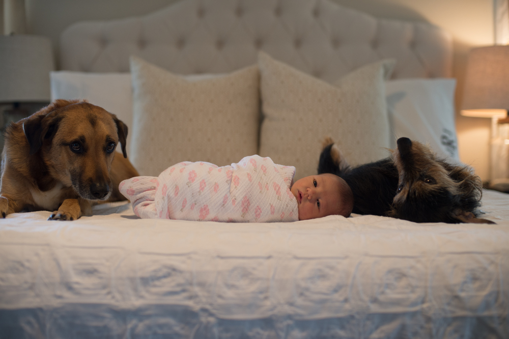 newborn photography home shoot with dogs jordan burch photography
