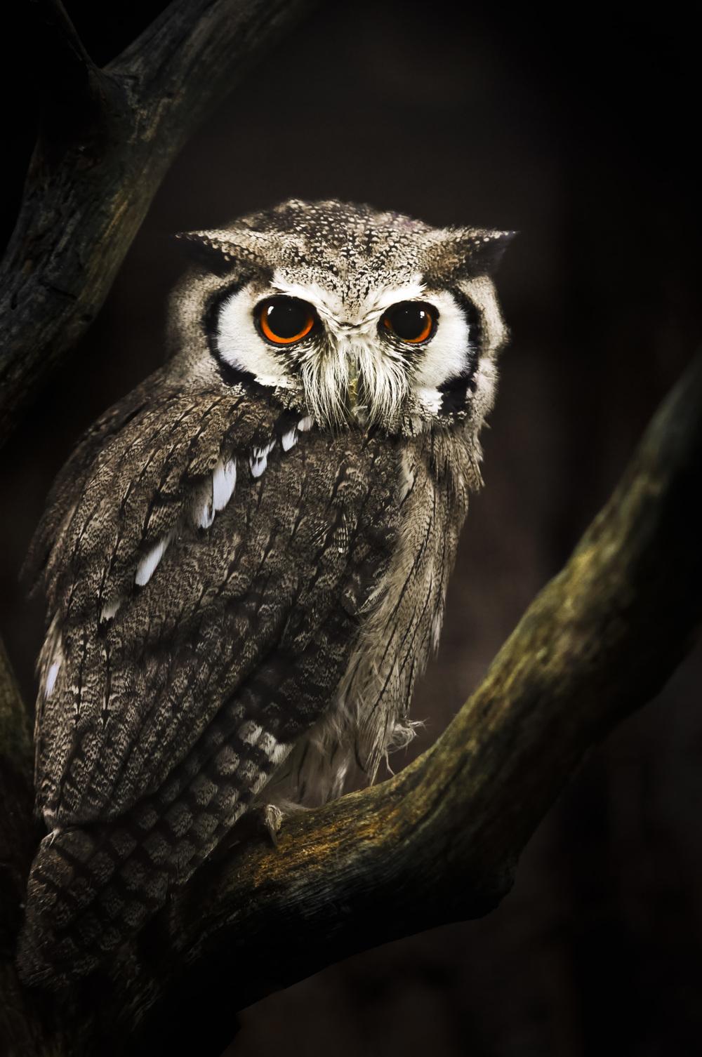 Ben_Wildlife.JPG