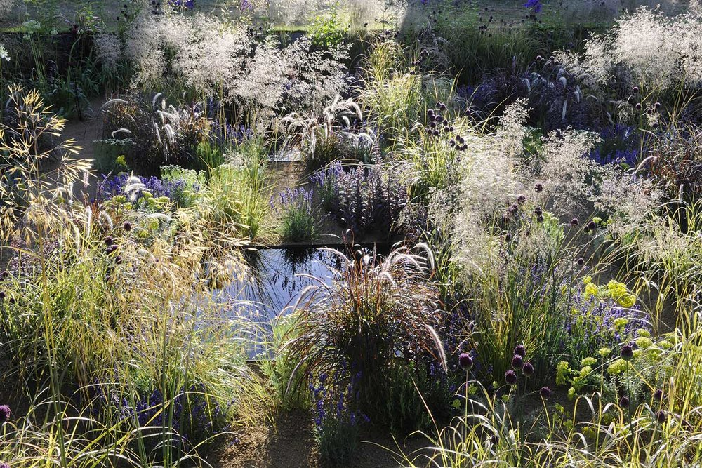 hampton-court-flower-show-2014-garden-naturalistic-grasses.jpg