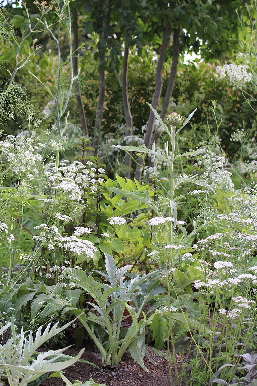 hampton-court-flower-medicinal-garden-fennel-yarrow-mint.jpg
