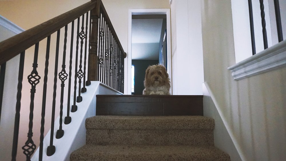 03/07/17 My dog runs up the stairs and waits for me at the top. It's a little rude tbh. You have 4 legs, you've got an advantage my friend.