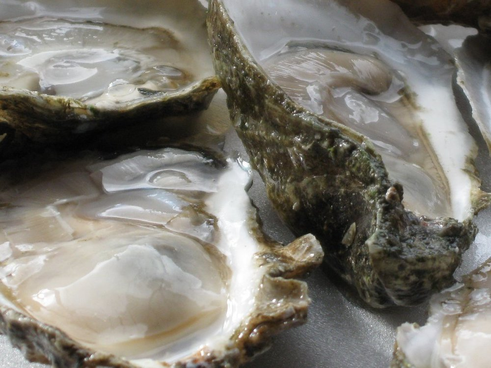oysters-on-the-half-shell.jpg