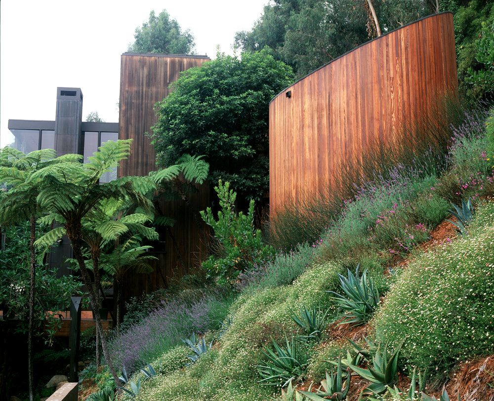 P-planted hillside_web.jpg