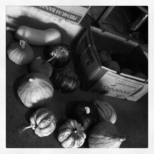 Carving Out the Eyes of Gourd - eight varieties of gourd - coming real soon (Taken with  Instagram  at TRVE Brewing Co.)