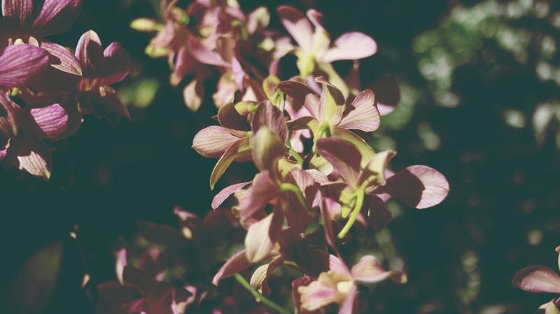 botanicalg-3.jpg