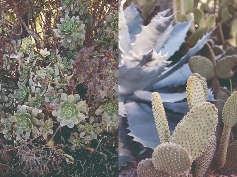 cactusg-2.jpg