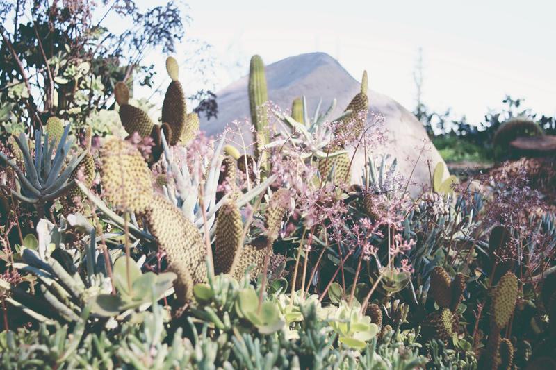 cactusg-1.jpg