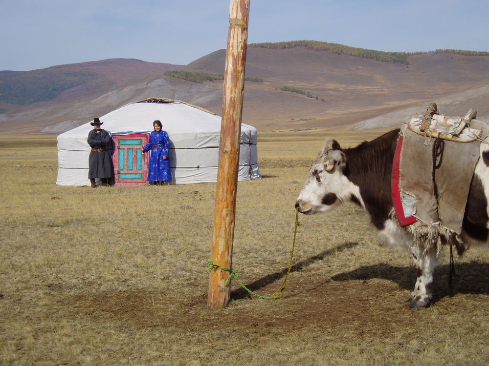 The nomadic group we stayed and worked with in the Darhat Valley, North Mongolia, brought us our own gear on this yak.