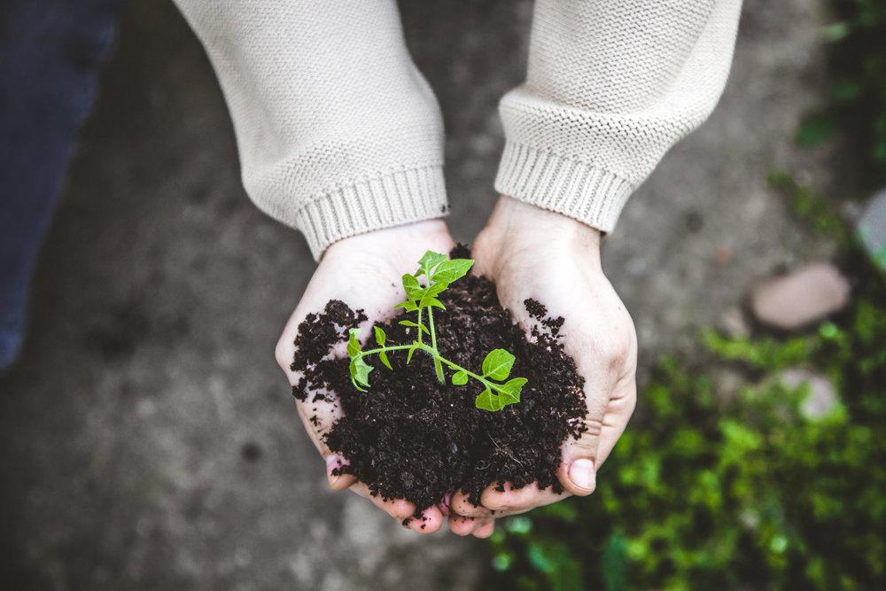gardener-PFUKSPA.jpg