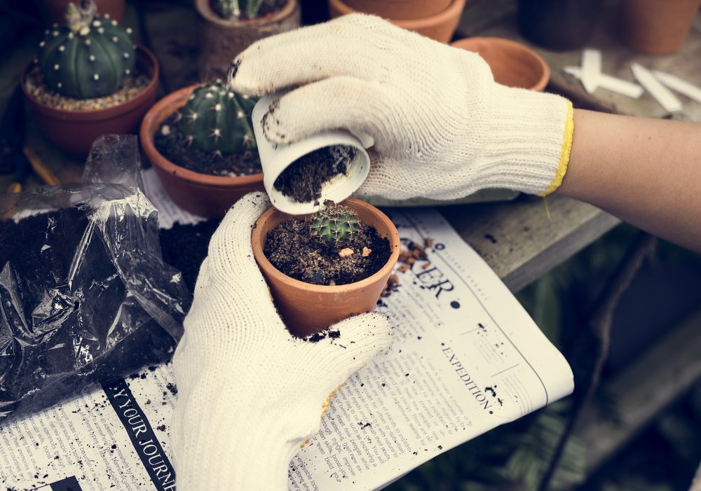 woman-gardening-PCFTX4G.jpg