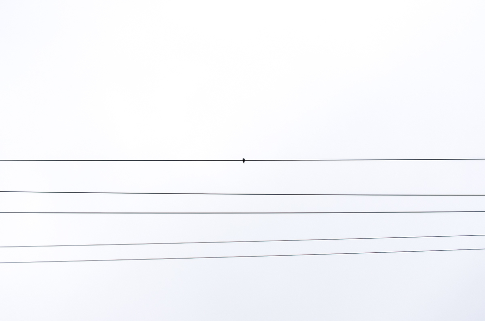 Lone bird on some power lines.