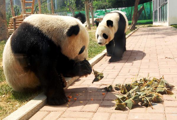 Everyone loves zongzi...