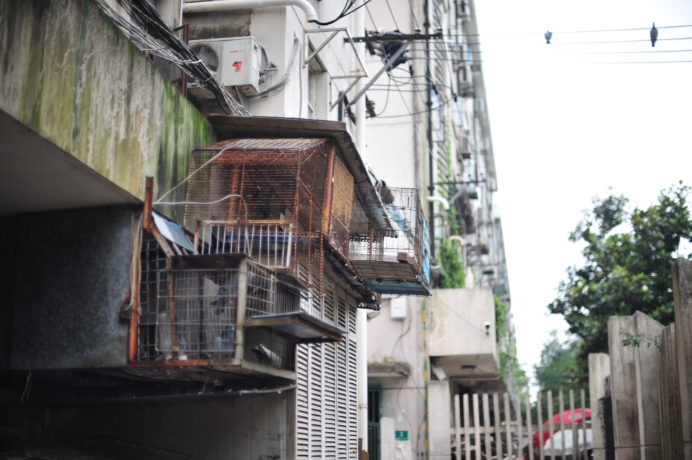 A pigeon coup in a local residential compound.  鸽子住在大杂院。