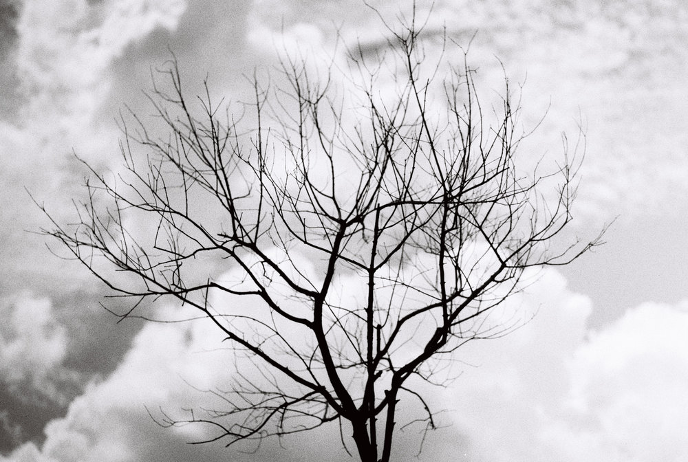 This bare tree stands out against the cloudy Shanghai sky.