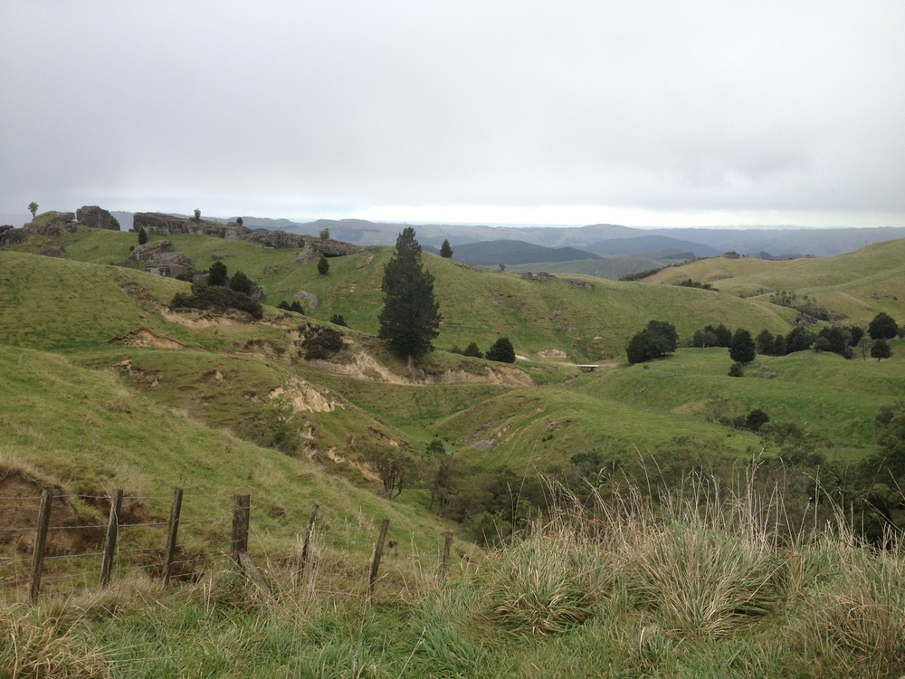 View driving back to the main road from Boundary Stream Scenic Reserve