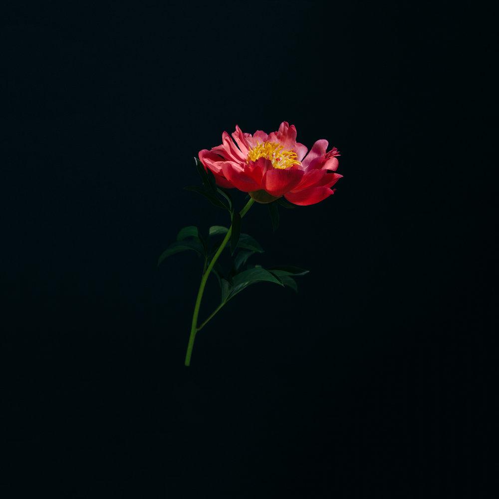 FLOWERS MAY 23-3.jpg