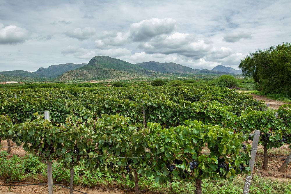 Campos De Solana winery
