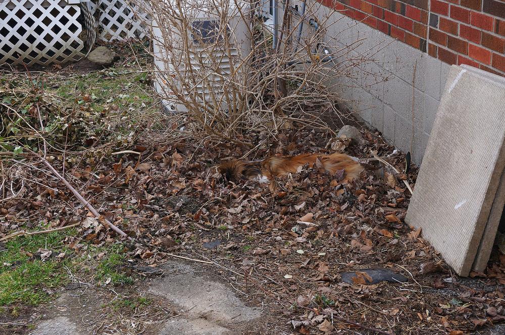 Sleeping Camouflaged