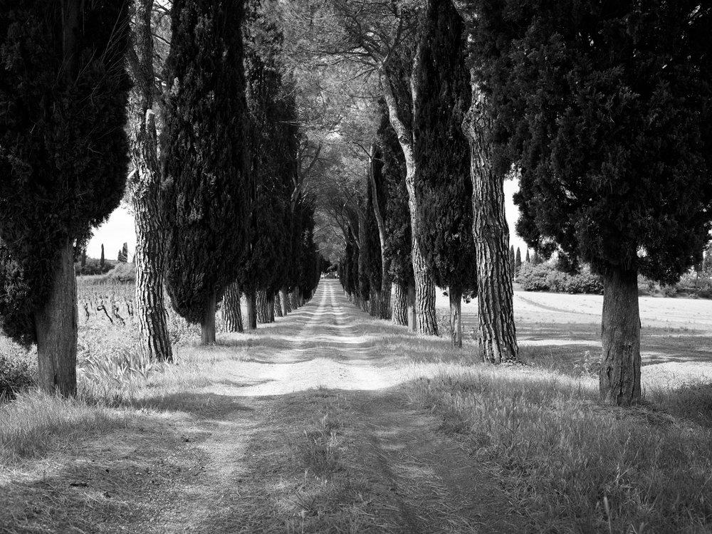 Tuscany_17-05-03_190.jpg