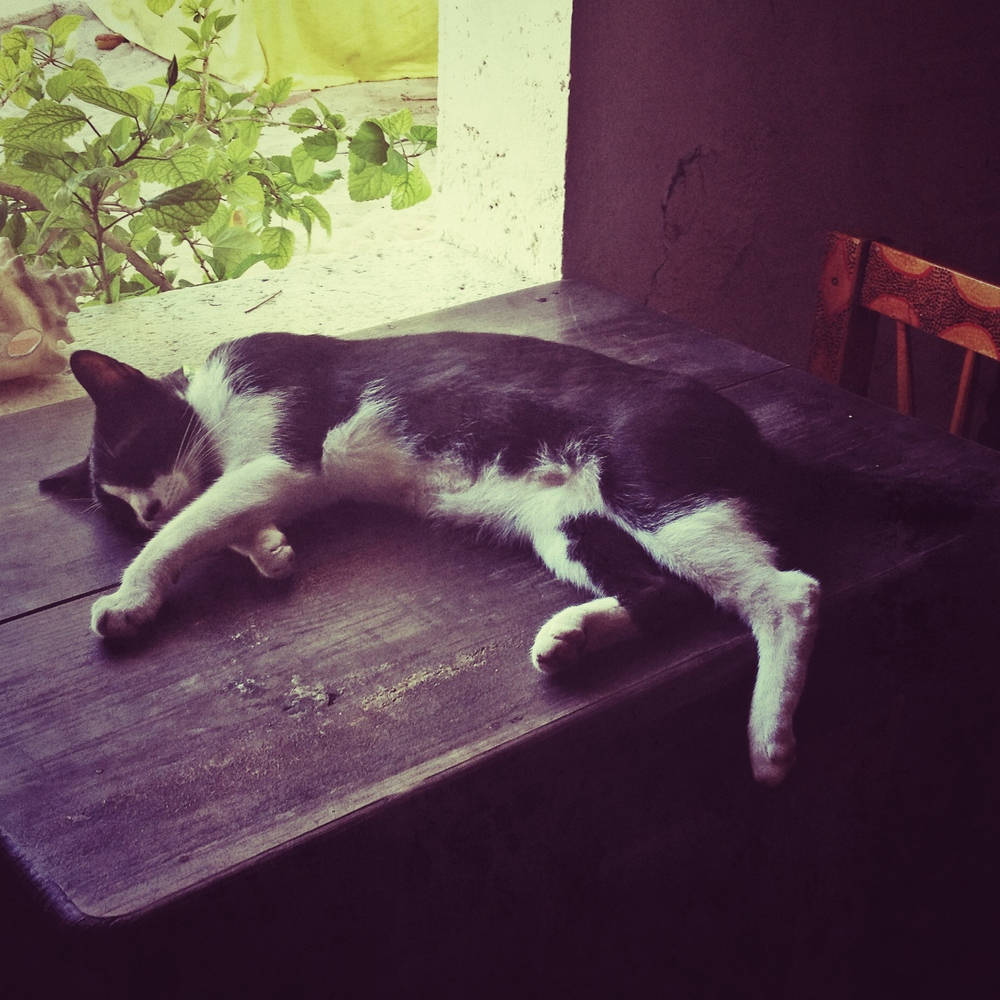 lazy cats at the hostel. i think this is all i ever saw them do..