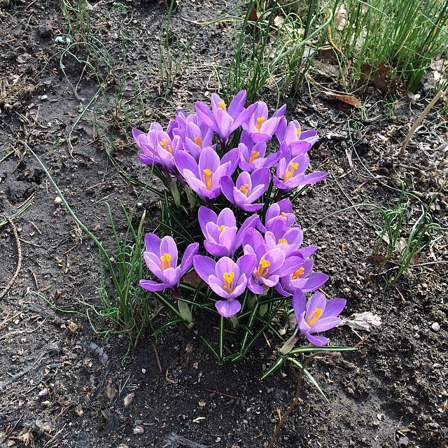 the first flowers of spring…